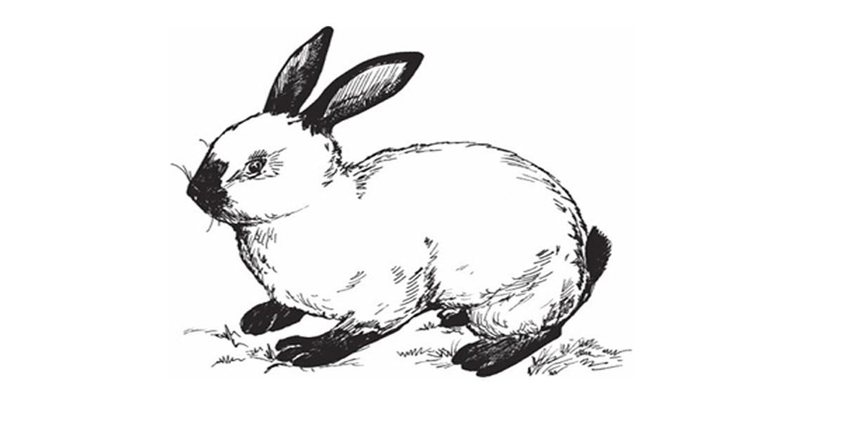 Сказка Как крольчонок Cнежок искал друзей (Россия, Надежда  Александровна Булатова). Слушайте Аудио. Скачиваете FB2.