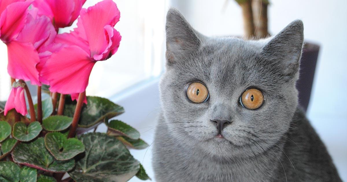 Сказка День рождения кошки Марси (Россия, Гаврисенко Анна Алексеевна). Аудио. FB2.